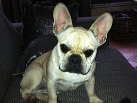 Pup van 10 maanden vermist