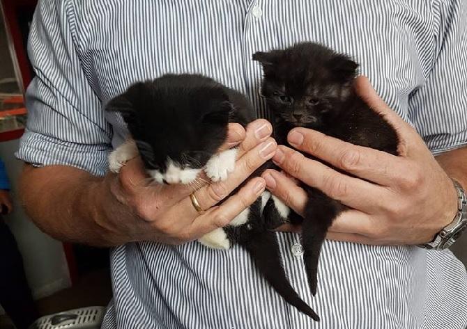Zieke kittens gedumpt in container Kockengen