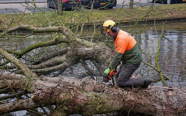 Gemeente Woerden kapt tientallen ongezonde bomen