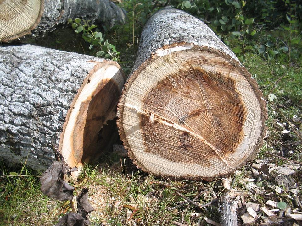 """""""Veel gezonde bomen gekapt in Woerden"""""""
