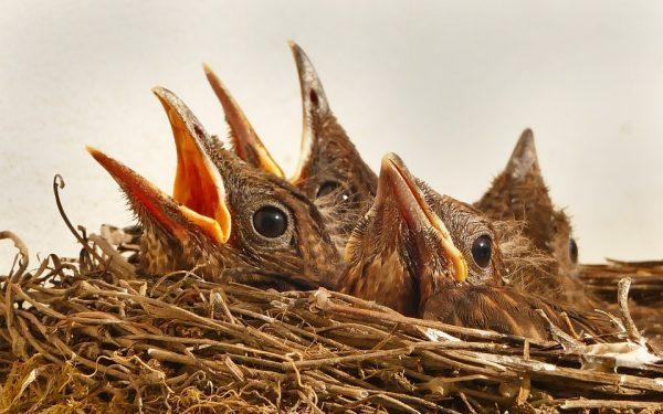 Woerdense dierenambulance: problemen door ruimtegebrek vogelopvang