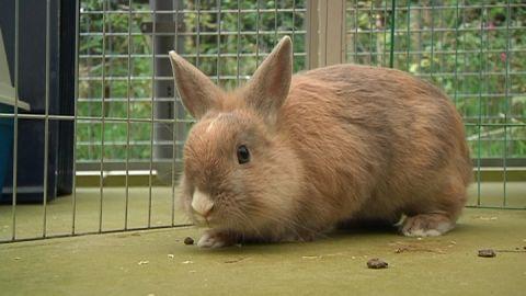 Opvallend veel konijnen in het wild gedumpt in Woerden