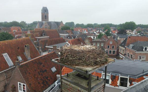 Brandweer haalt dood ooievaarsjong uit Oudewaters nest
