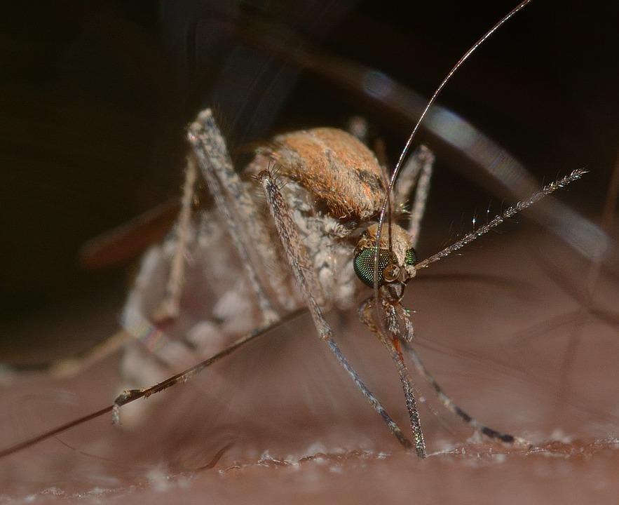 Let op, nieuwe steekmuggen op komst