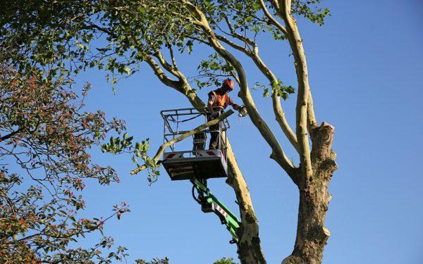 College laat 2500 bomen kappen