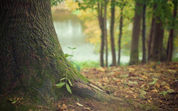 Gemeente wil aantal bomen in Woerden niet verminderen