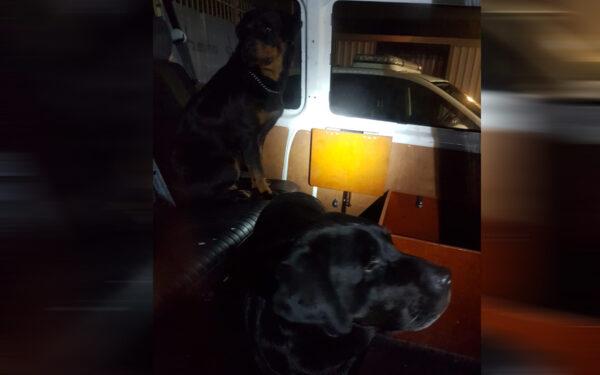 Politie zoekt eigenaar gevonden honden