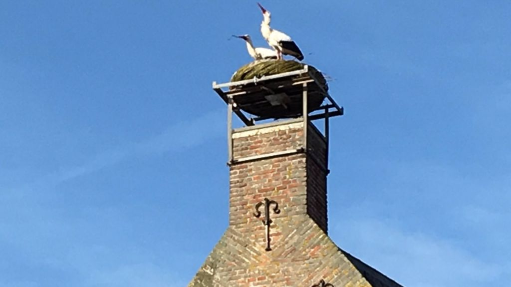 Ooievaars Oudewater inspecteren nieuw nest